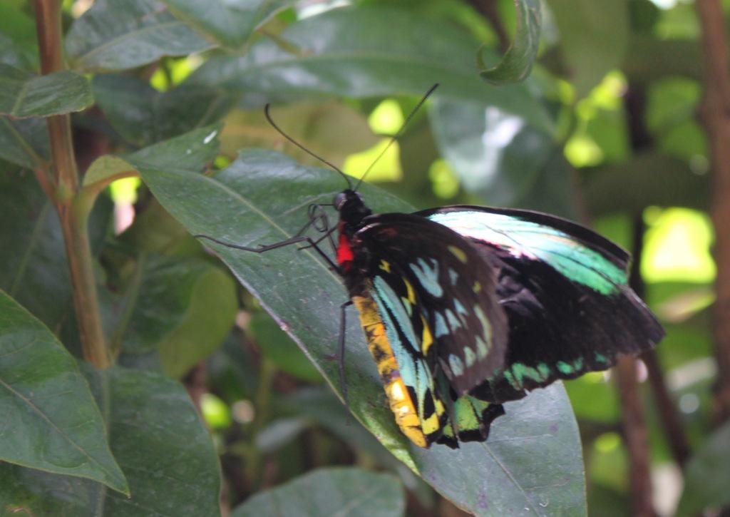 Butterfly Pavilion Field Trip