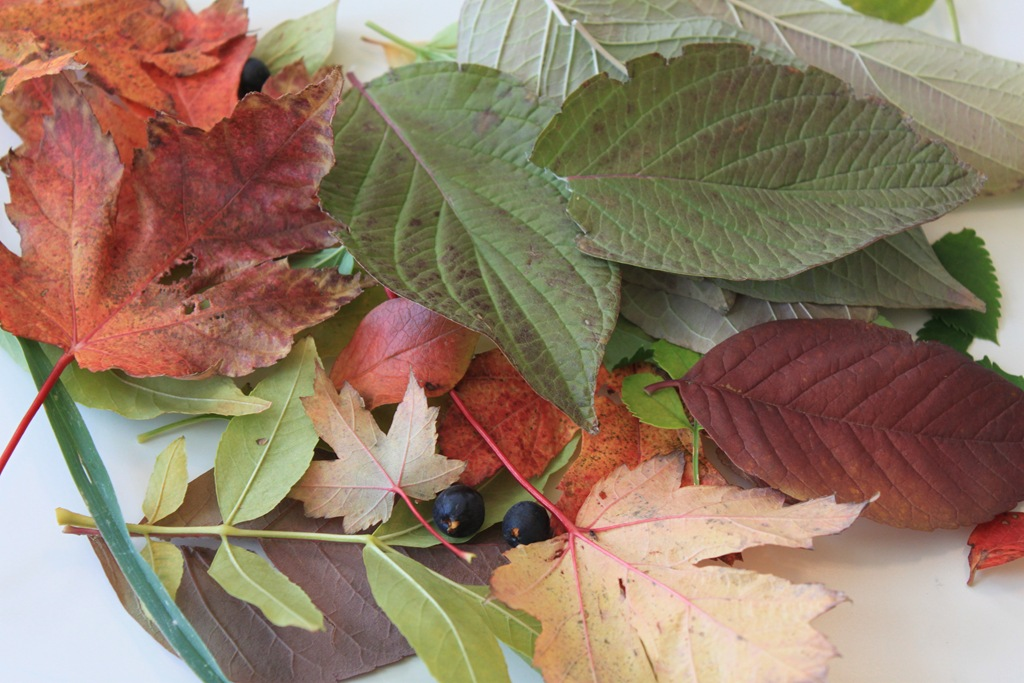 Summer Boredom Busters: Leaf Collection