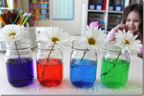 Science Experiment Colored Flowers Confessions Of A Homeschooler