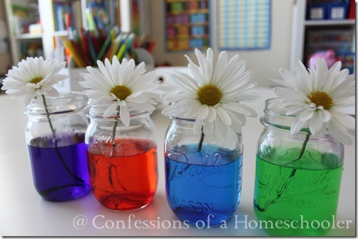 Science Experiment & Colored Flowers - Confessions of a Homeschooler