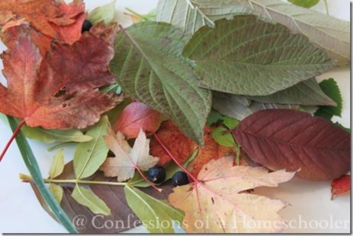 leavesweb