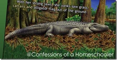 smithalligator