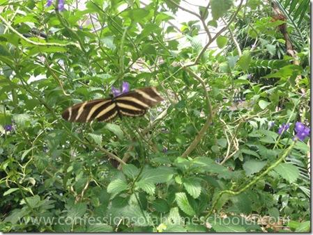 butterflypavilion201513