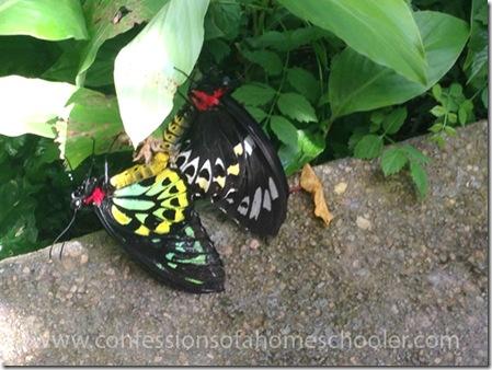 butterflypavilion201514