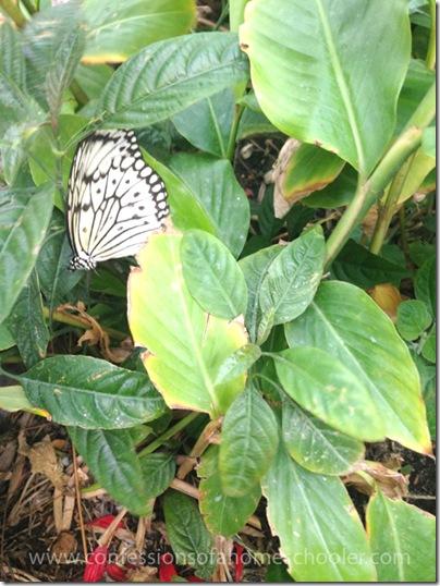 butterflypavilion201517
