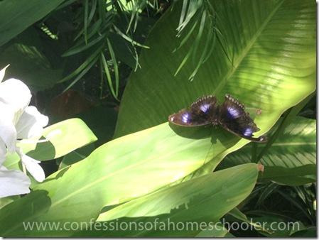 butterflypavilion20157