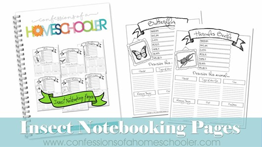 Insects Notebooking Pages Bundle