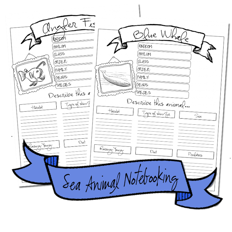 seaanimals_notebooking2