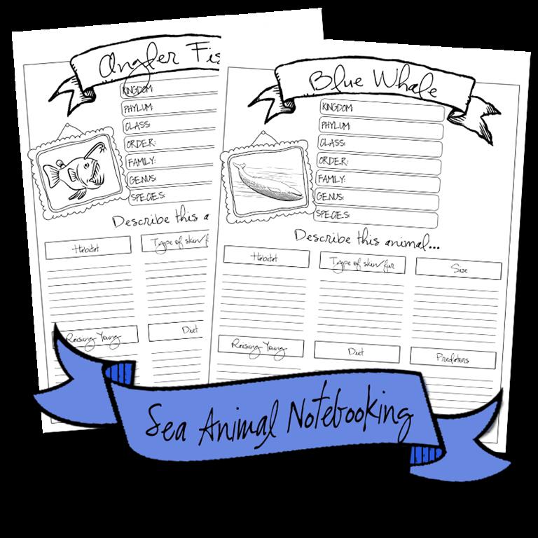 seaanimals_notebooking2
