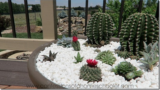 vlog8_cactus