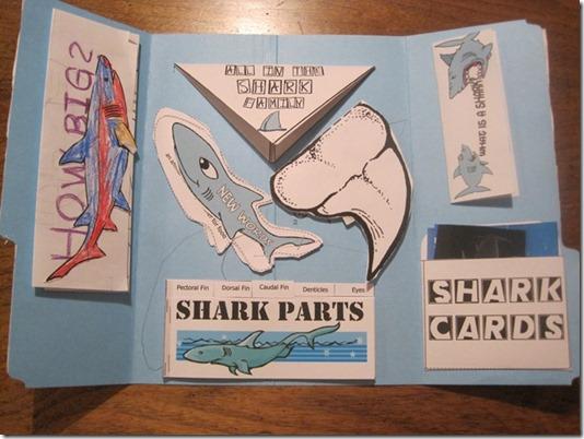 sharklapbook