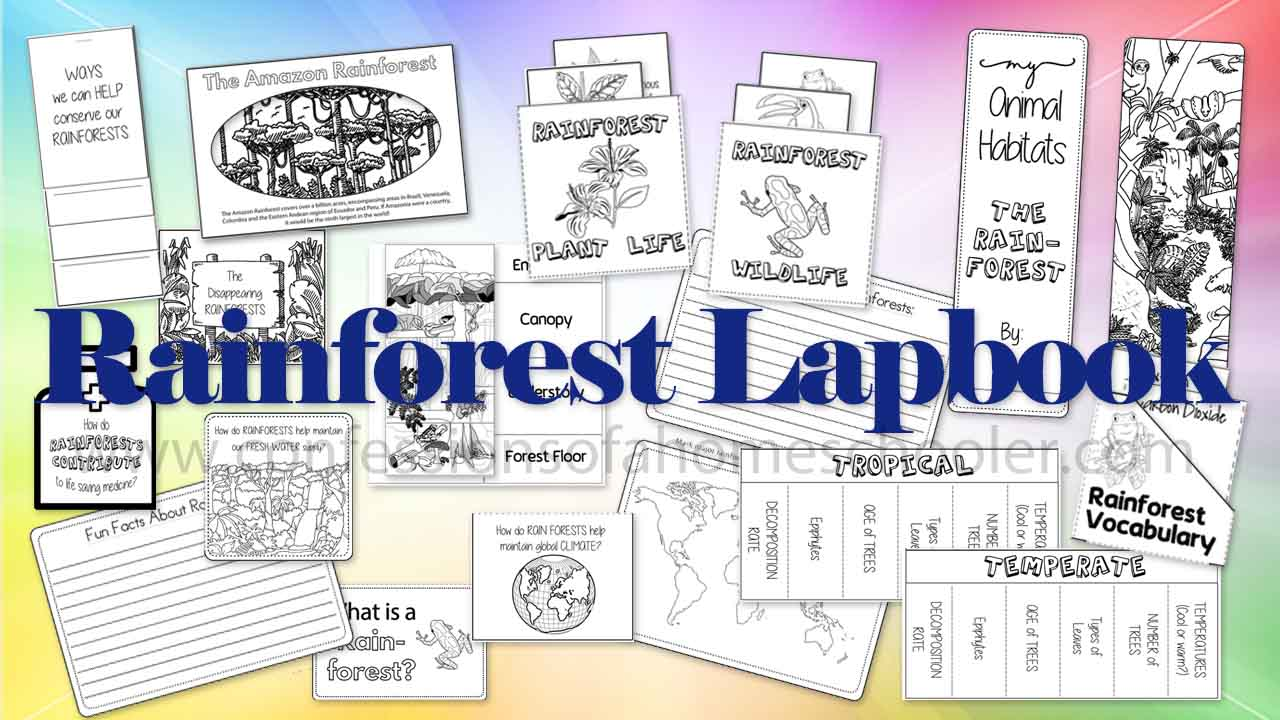 Rainforest Lapbook 2